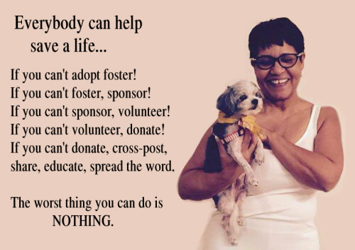 Donate adopt foster volunteer